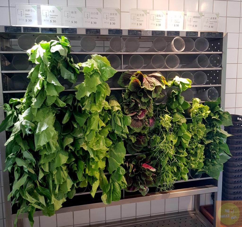 綠色蔬菜區