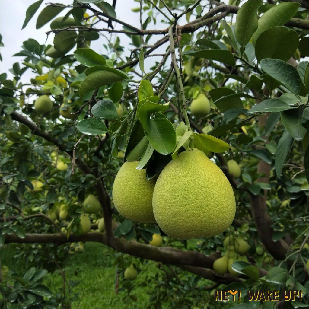 新月傳說景觀餐廳柚子